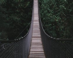 Footbridge in a forest