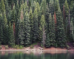 Thick forest on a lake