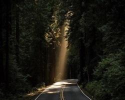 Light beam forest small u