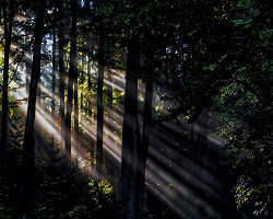 Light through trees in forest