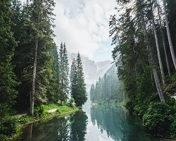 River through forest