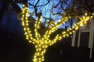 Appletree lights JL 300x200