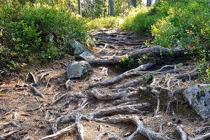 Forrest trail KL 300x200