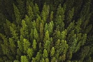 Green trees 300x200
