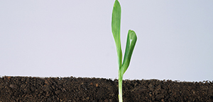 Growth plants seed 300 by 145