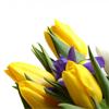 Morningstars beleggingsbarometer maart – populairste beleggingsfondsen en ETFs