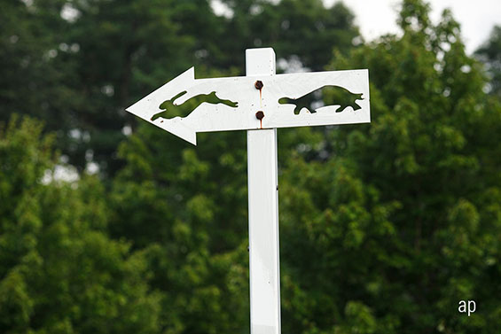 tortoise versus hare road sign, active versus passive, richard buxton, old mutual