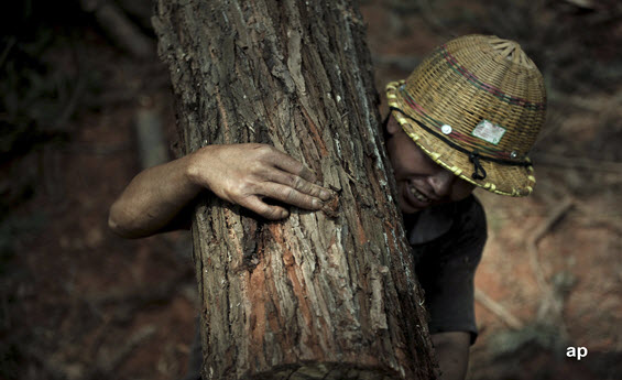 Timber worker in China
