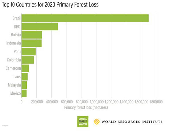 country forest loss comparison chart