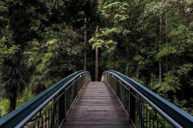 Bridge to trees