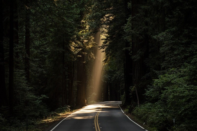 Sunbeam on a road in a forest