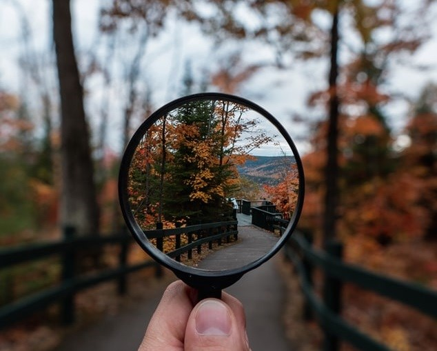 Magnifying glass in front of forest