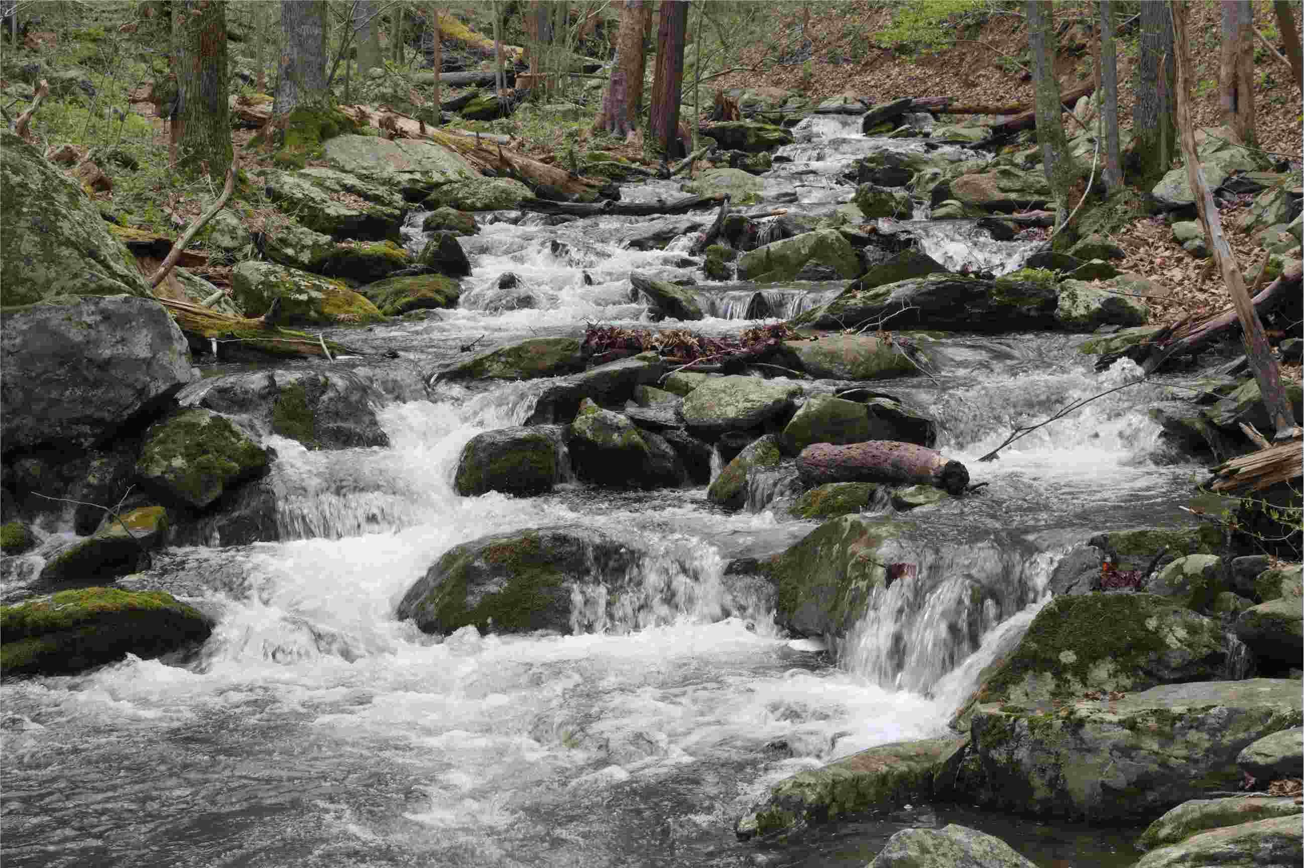 River stream dividend