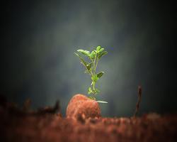 bild einer kleinen grünen Pflanze