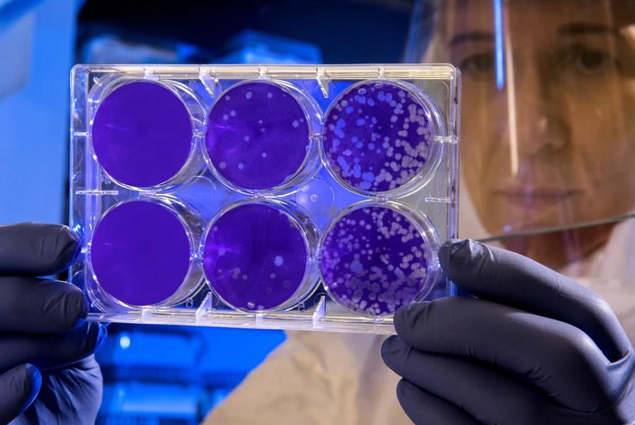 Coronavirus, la corsa del biotech potrebbe finire presto
