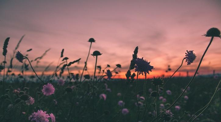 Sunset 725x400