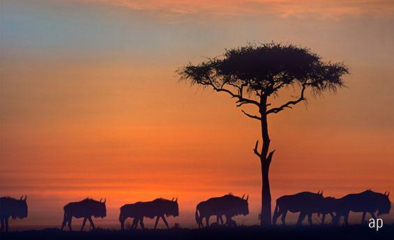 Kenya Africa safari emerging markets frontier markets developing economies